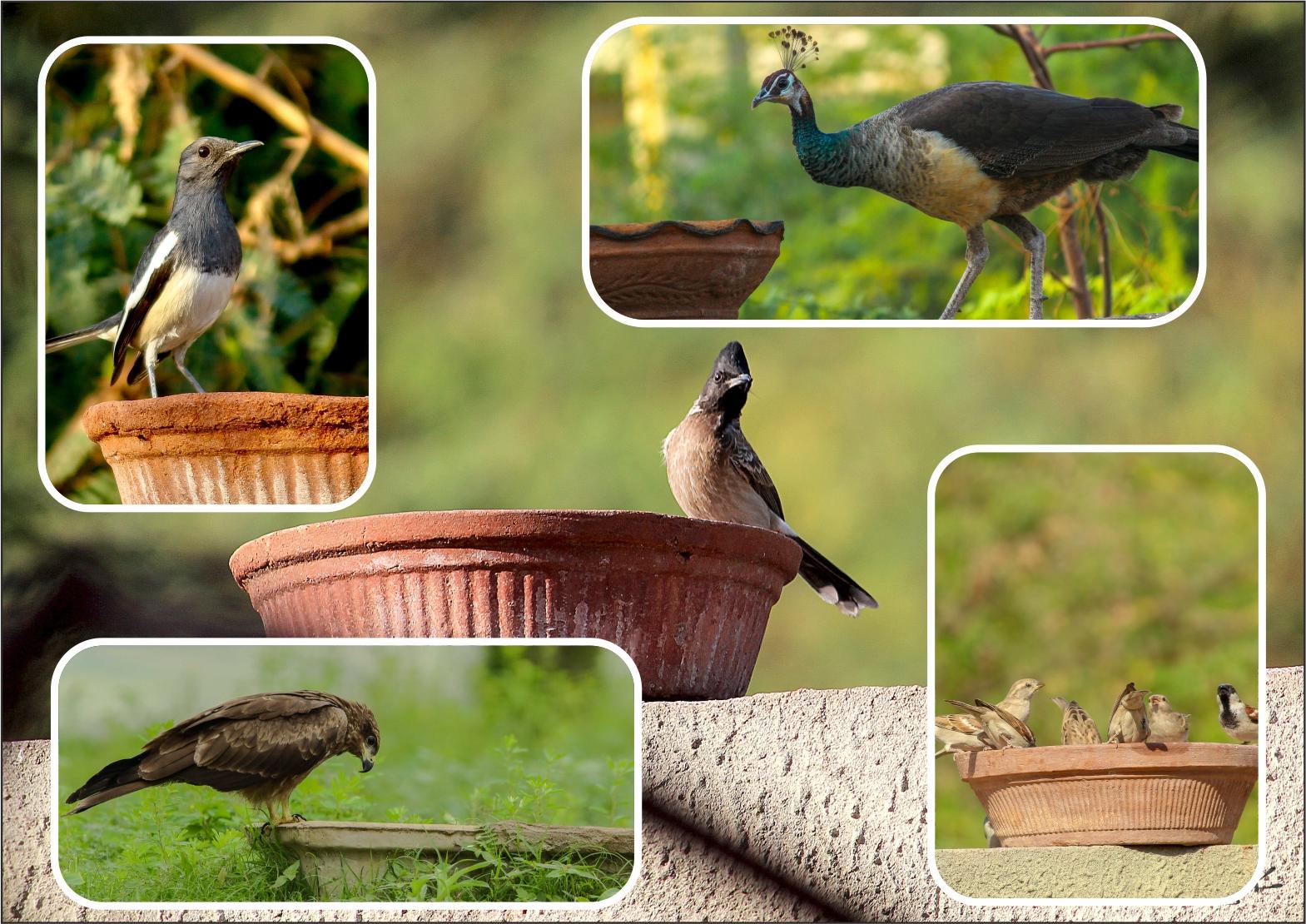 Help Bird In Summer